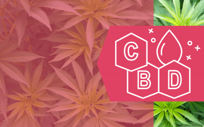 CBD Series: Part 1: Cannabis in The World of Breast Cancer by Dr. Susan Love